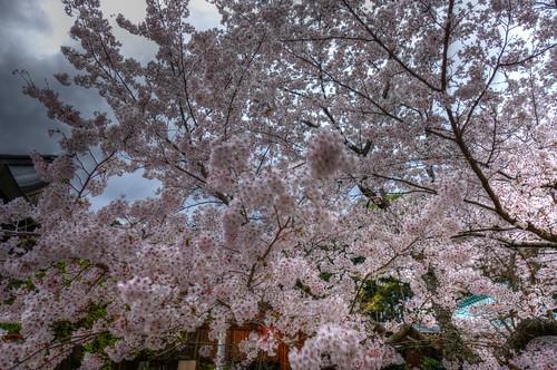 02-04-2020 Nara pref. Tatsuta-Taisya Shrine (2)
