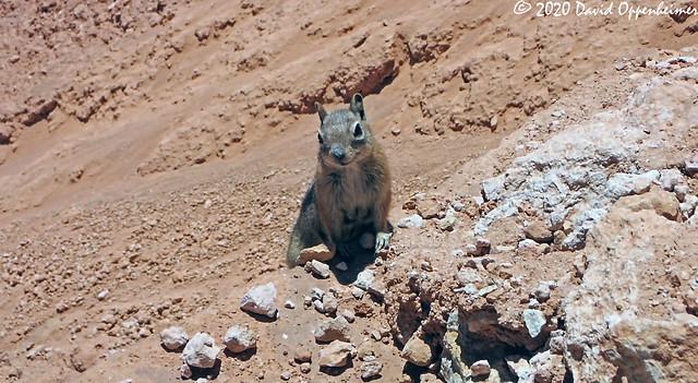 Chipmunk at Bryce Canyon National Park