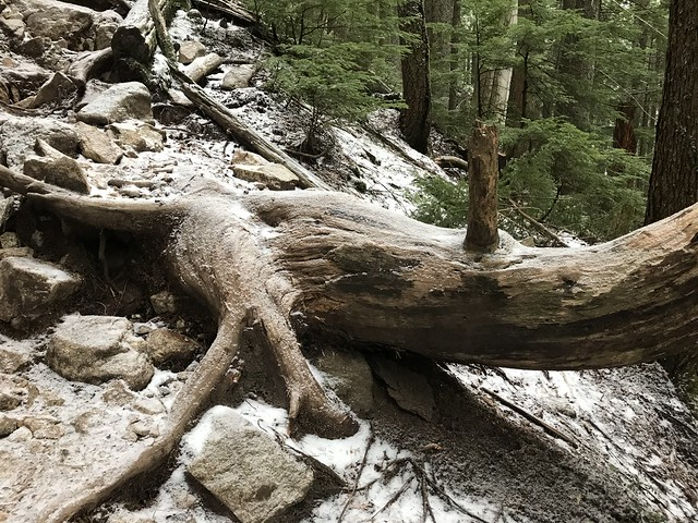 Hike up Grouse Mountain..