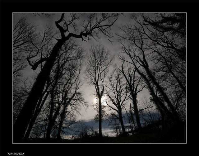 Dans les bois de Chatillon Sur Lison