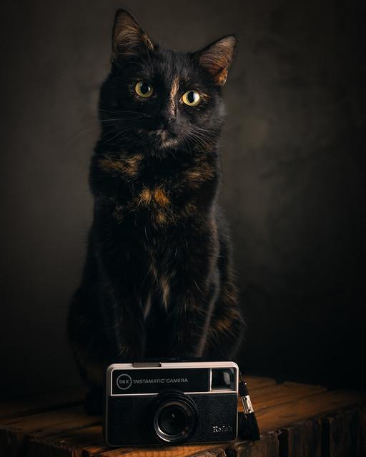 Photographer-cat Mimi