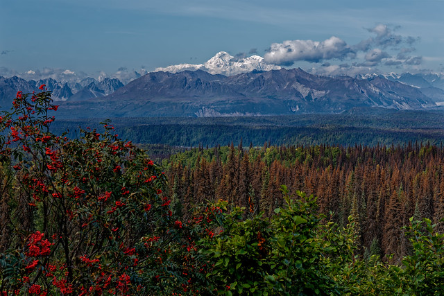 Denali Has a Way of Taking One's Breath Away! (Denali State & National Parks)