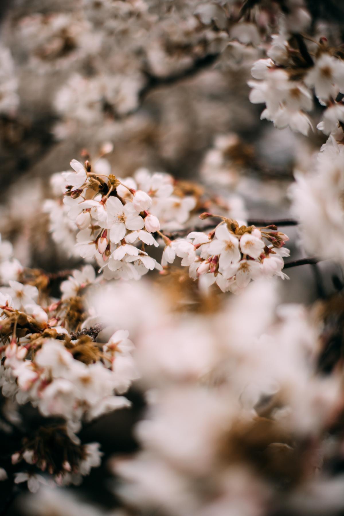 bloss-26