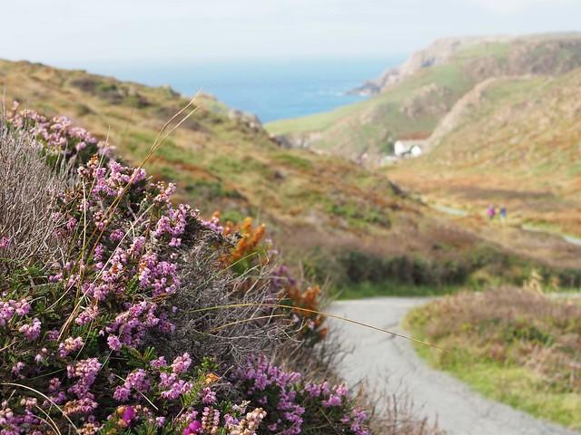 Winding path to Kynance Cove, Cornwall
