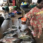 Fresh tilapia for sale in an open market_Brianna Bradley_WorldFish