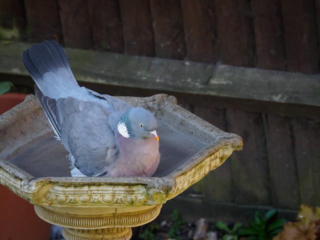 Bird Bath-G4010137