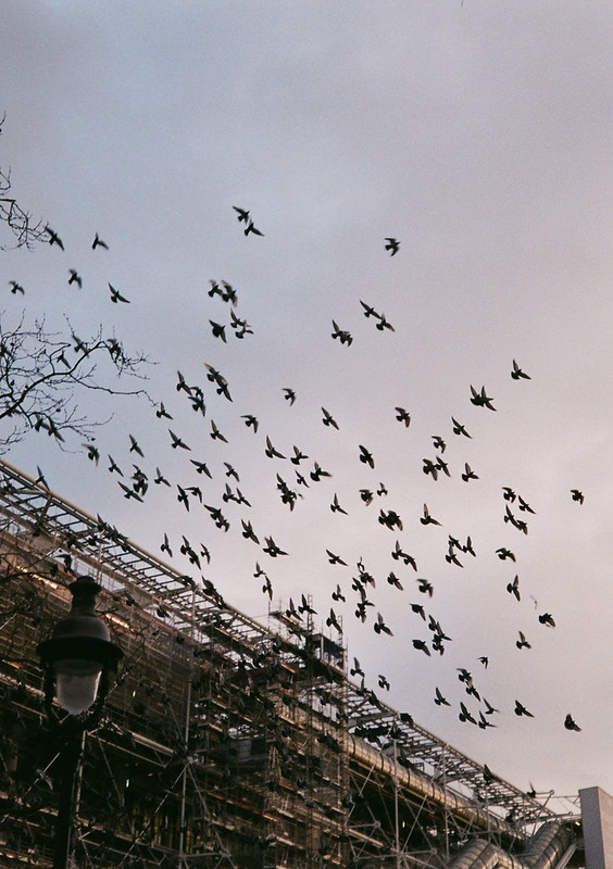 Birds Outside Le Centre Pompidou
