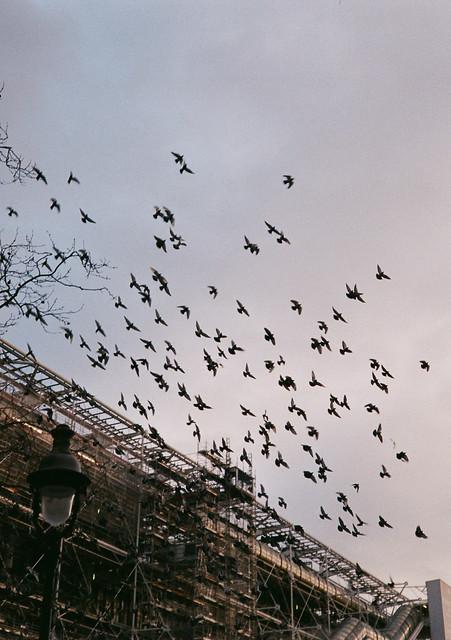 Birds Outside Le Centre Pompidou
