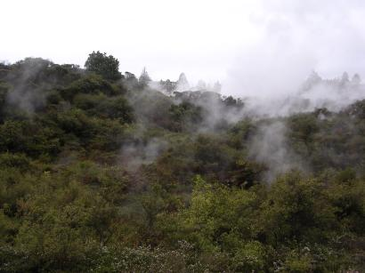 Steaming Forest
