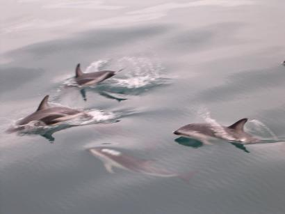 Dolphins (1)