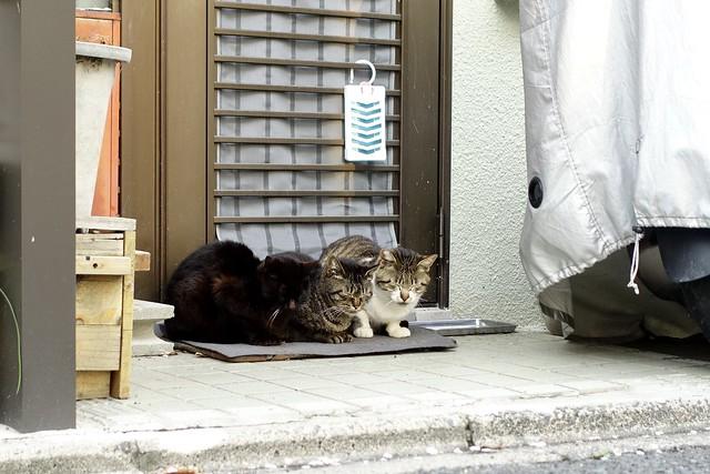 Today's Cat@2020ー04ー03