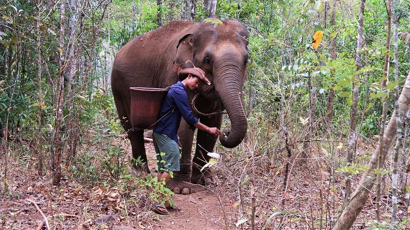 Hike With Elephants, CAMBODIA, February 2020