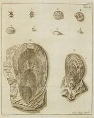 Tafel II