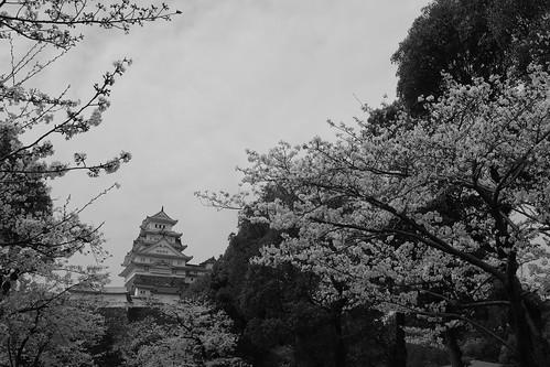 03-04-2020 Himeji (32)