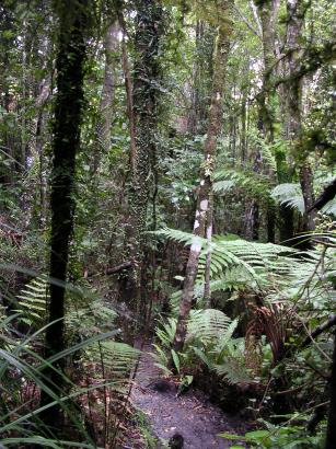 Te Nikau Jungle