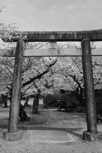 03-04-2020 Himeji (19)