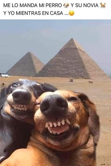 cuarentena los perros paseo