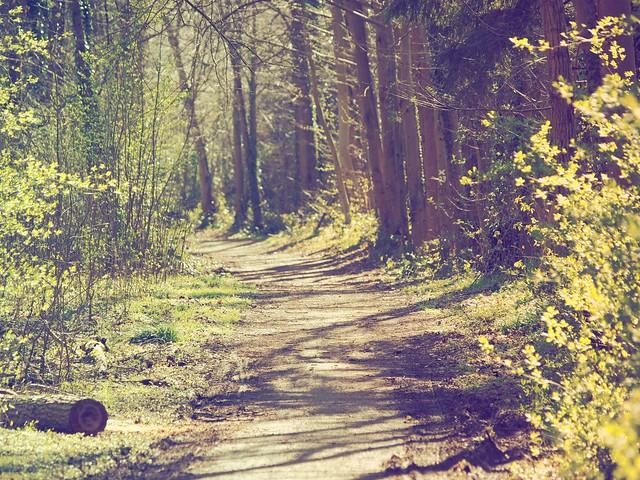 Waldweg an der Rur