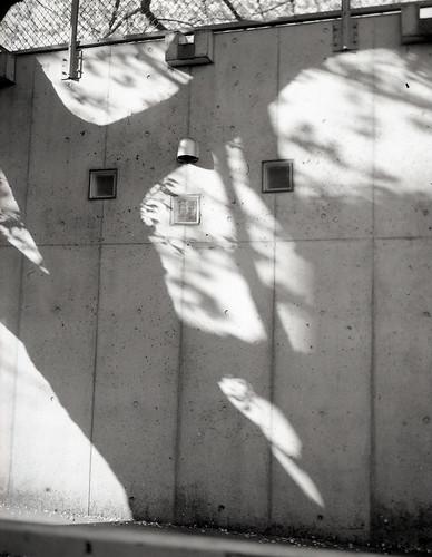影の中の光