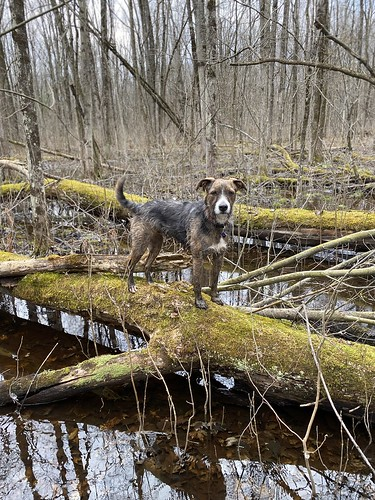 Dog on mossy log