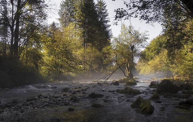 Der Baum im Fluss