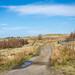 SJX_0900 - Dunnockshaw Community Woodland