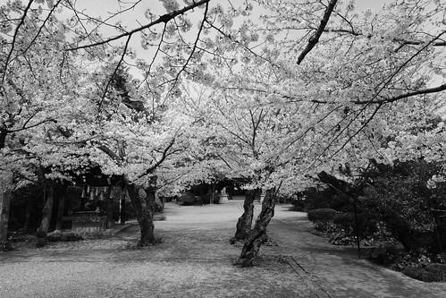 03-04-2020 Himeji vol02 (15)