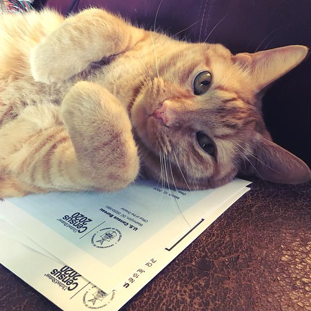 Census Cat