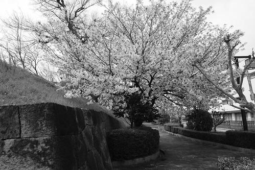 03-04-2020 Himeji vol02 (29)