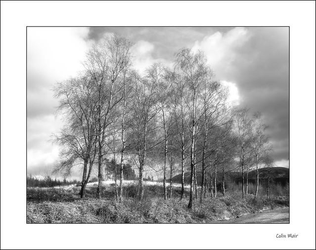 Trees - 2020-03-08th