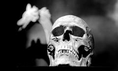 schedel en schip
