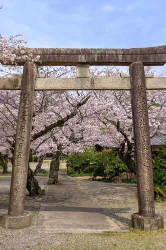 03-04-2020 Himeji, Himeji-jinjya Shrine (1)