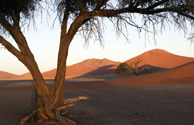 Dunes of Sossus Vlei, Namibia, early evening