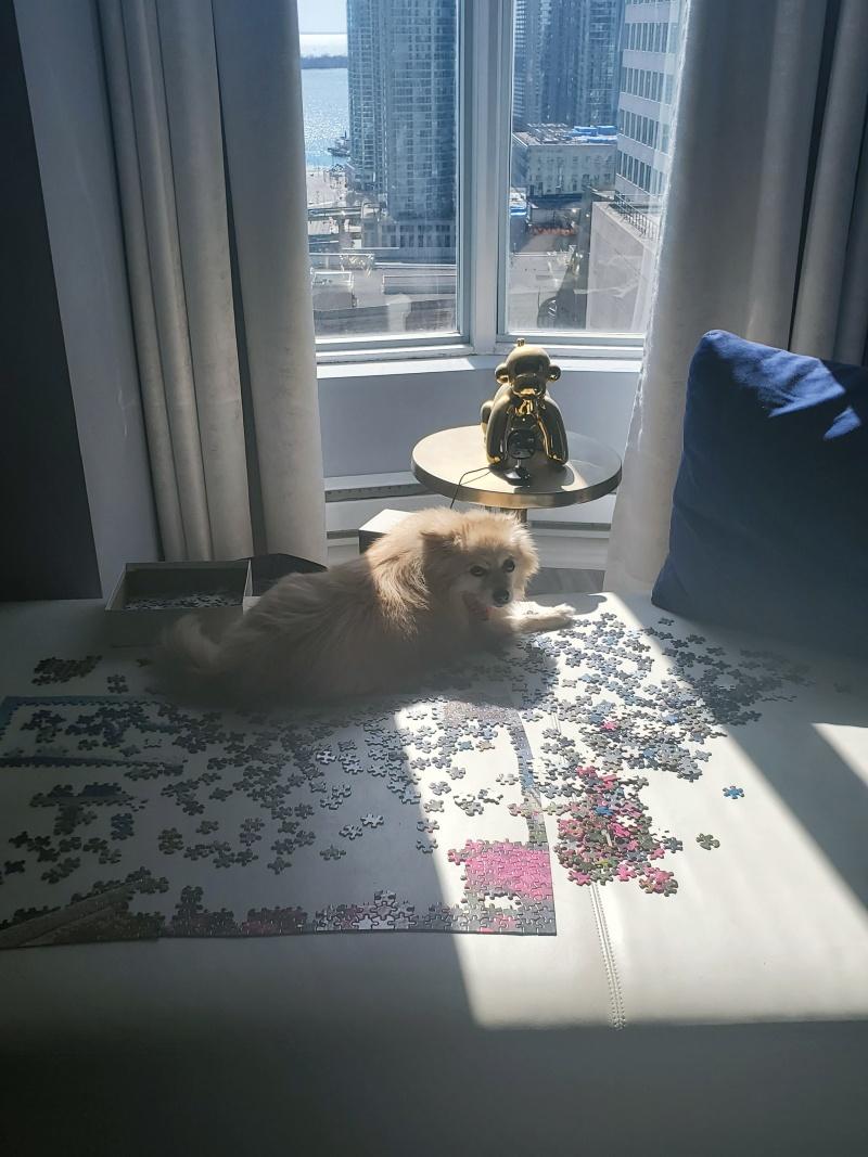 hennessy pomeranian puzzle