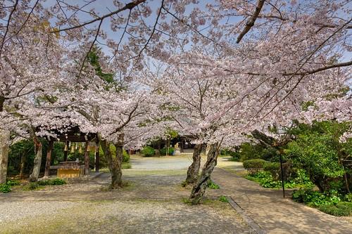 03-04-2020 Himeji, Himeji-jinjya Shrine (3)