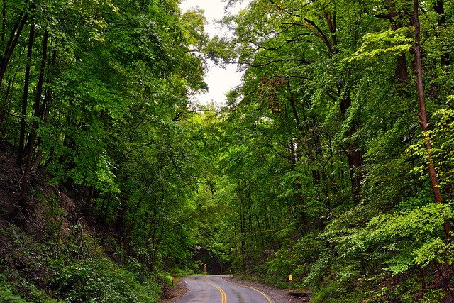 For the Heart Cannot Lie...It is Truly Beautiful Amongst the Forest and Woods (Cuyahoga Valley National Park)