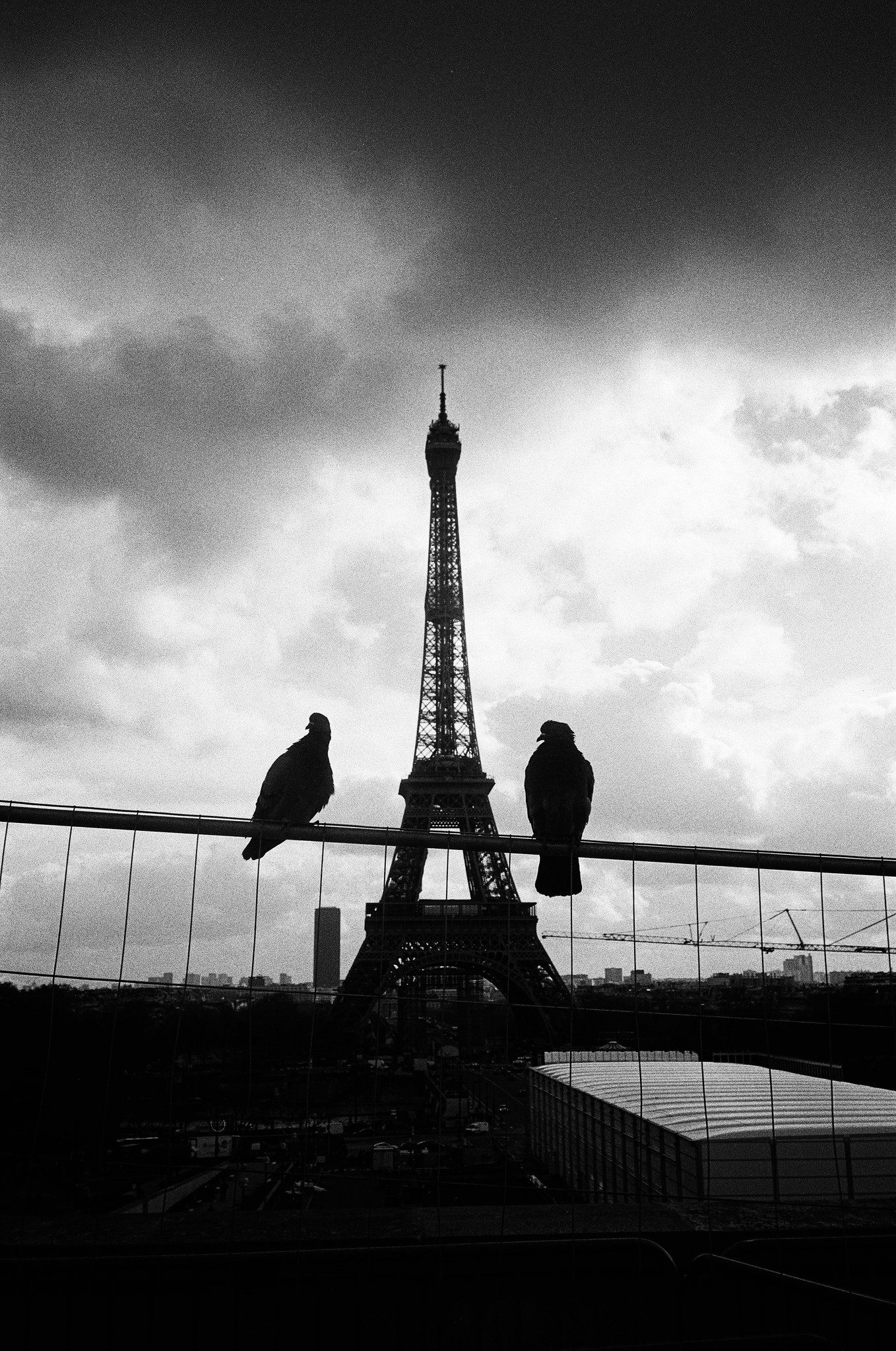 Pigeons and The Eiffel Tower