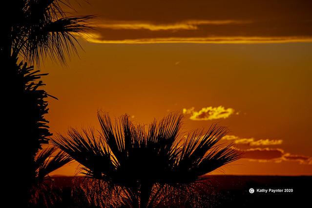 Palm Sunset 1052