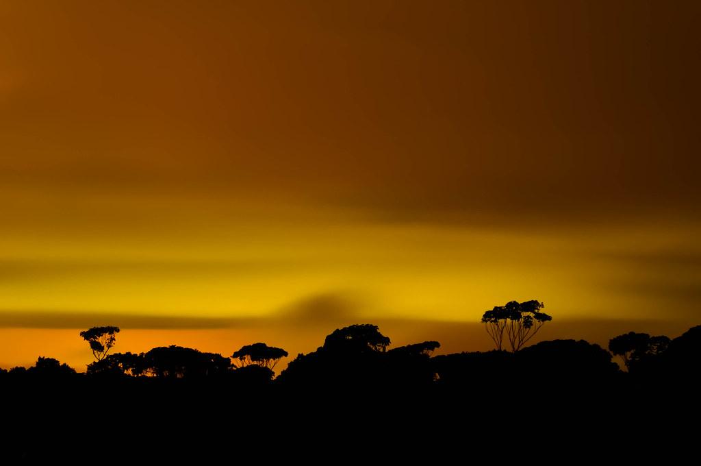 Nuvens por Cima da Floresta