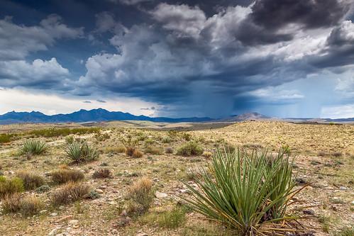 arizona mohave mojave mojavedesert usa unitedstates cloud desert landscape plant sky storm yucca