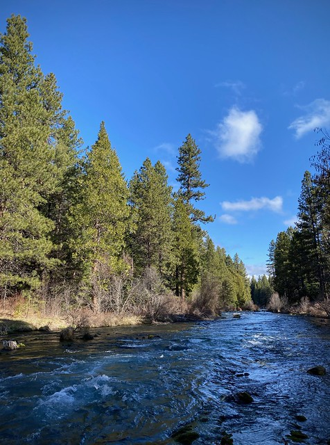 Along the Metolius