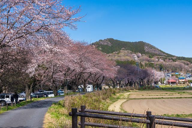20200324_日和田山を眺める@巾着田
