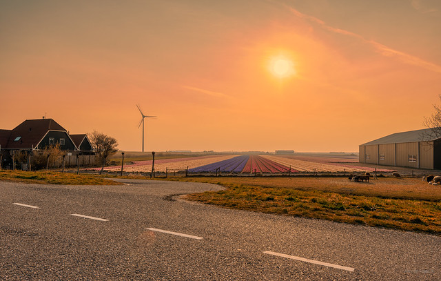 Dutch countryside.