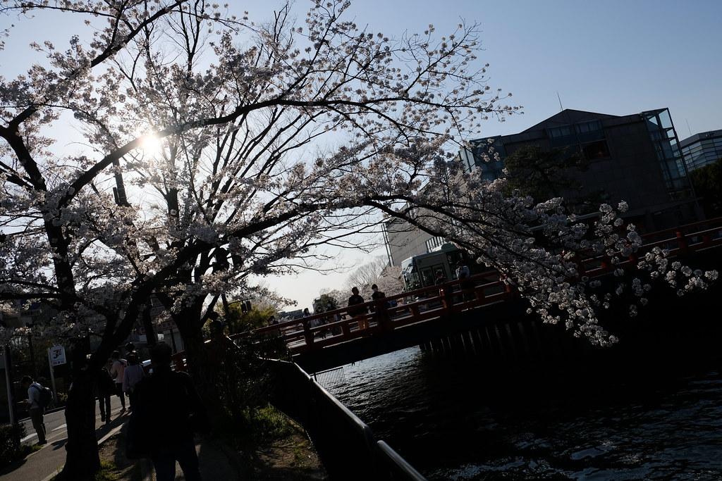 2020/04/04 京都岡崎