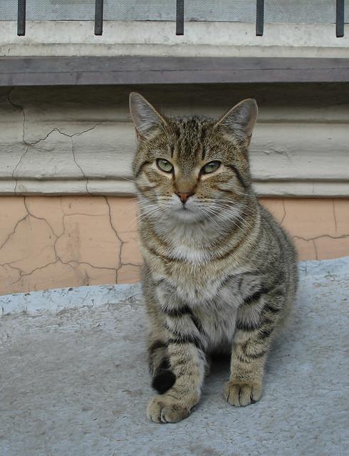 Feline291