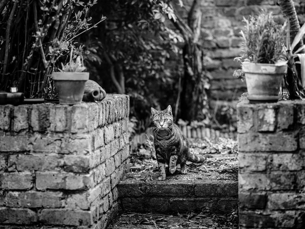From the archives: Sweet Bibi in the garden