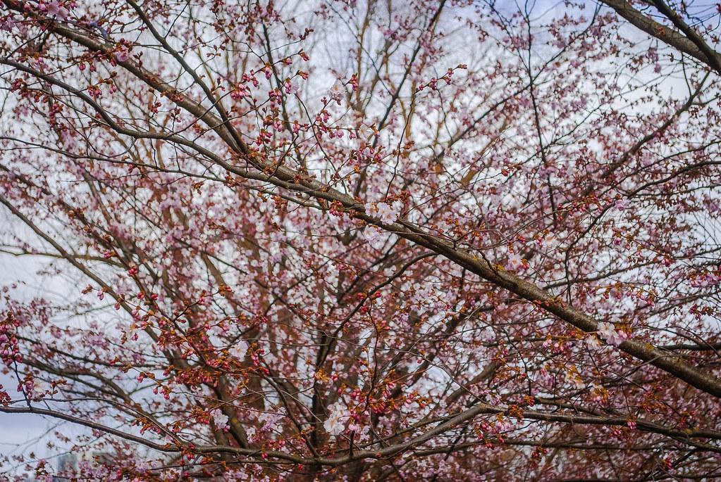 Pretty spring !!  12:39:24 DSC_4857
