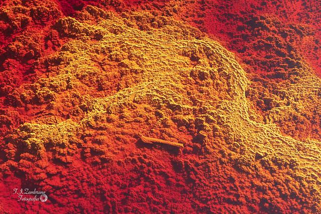 Stromatolite formation ..