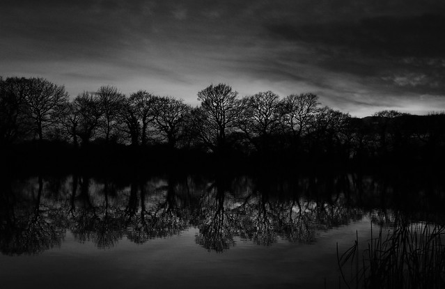 Black & White Tree Reflection on the Lake