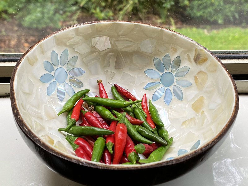Collecting chillis